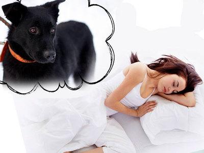 Сонник черная Собака 😴 приснилась, к чему снится черная Собака во сне видеть?