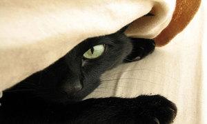 Приснилась кошка
