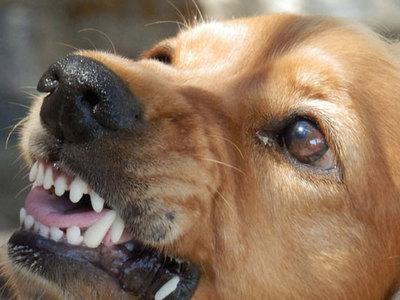 Сонник укусила собака за руку без крови