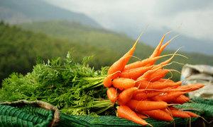 К чему снится морковь?