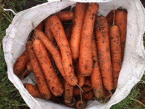 Большое количество моркови во сне