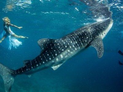 Сонник толкование снов к чему снится акула