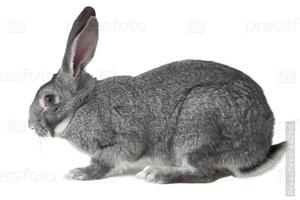 К чему снится во сне серый заяц