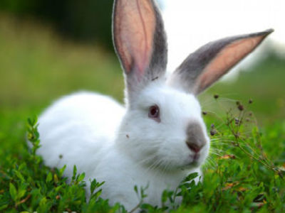 Сонник ? белый кролик приснился: к чему снится белый кролик во сне