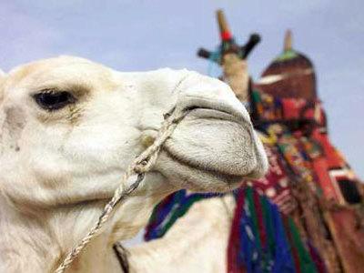 К чему снится верблюд женщине сонник ванги