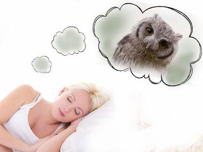 К чему снится 😴 Сова во сне — по 90 сонникам! Если видишь во сне Сова что значит?