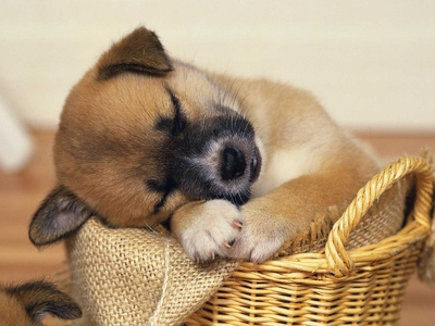 Сонник маленький Щенок 😴 приснился, к чему снится маленький Щенок во сне видеть?