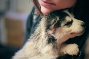 Обнимать щенка во сне