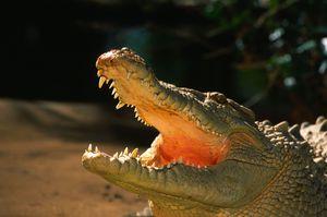К чему приснился женщине крокодил