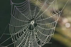 Как растолковать сон про паутину
