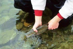 Приснилась рыбалка