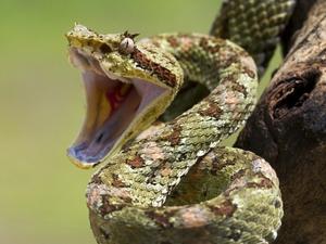Как растолковать сон про убийство змеи