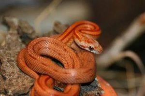 Приснилось убийство змеи