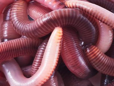 Сонник черви к чему снятся черви во сне
