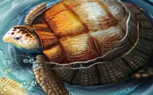 Черепаха - символ мудрости