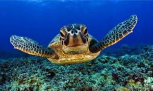Приснить черепаху в воде
