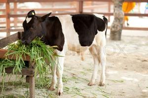 Кормить животных зеленой травой