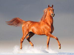 К чему снится рыжая лошадь