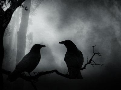 К чему снится чёрный ворон и нужно ли этого бояться? Основные толкования: к чему снится чёрный ворон - Автор Екатерина Данилова