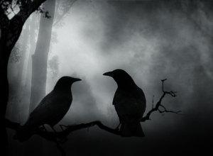 К чему снится ворона во сне?