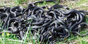 Приснились змеи