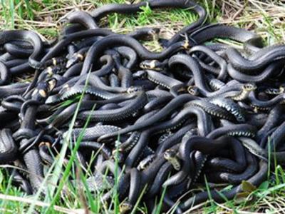 Сонник разные змеи