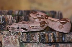 Толкование снов про змей по сонникам