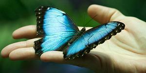 Голубая бабочка во сне
