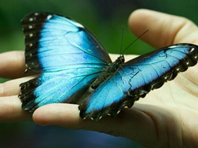 К чему снятся бабочки – сонник: бабочки