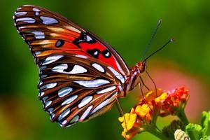 Большая бабочка в сновидении
