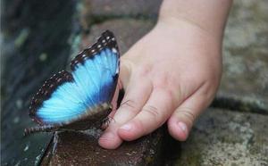 Бабочка в сновидении