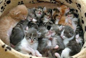 К чему снится много котов во сне