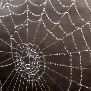 Видеть во сне паука в паутине