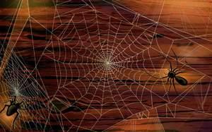 Видеть во сне паука