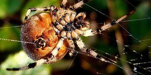 Как растолковать сон про паука и паутину